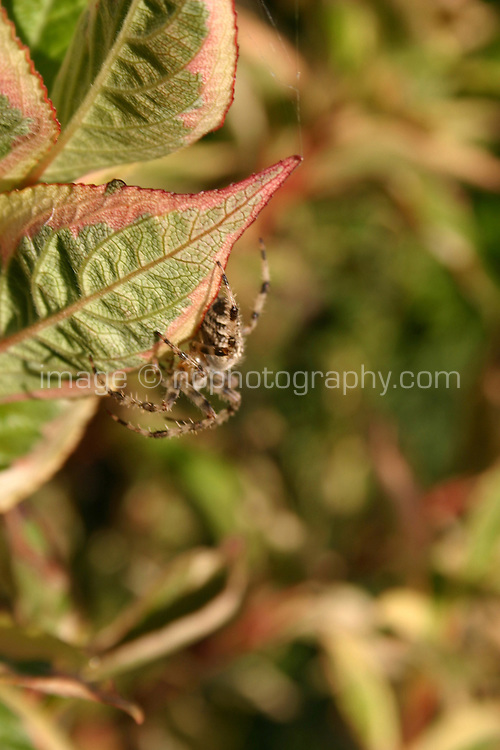 Spider on plant<br />