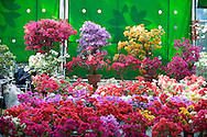 Colorful flowers for sale at the Taipei Flower Market.