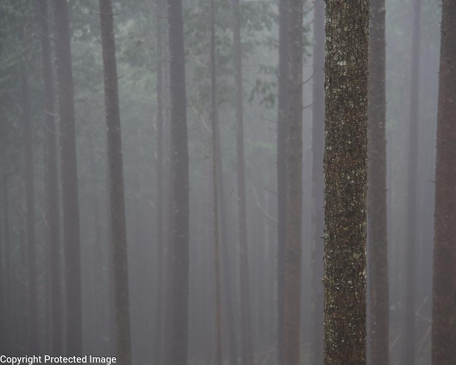 A lovely, foggy northwest morning.