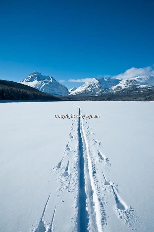 lone ski tracks across frozen two medicine lake, rising wolf mountain, glacier national park, montana