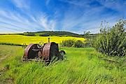 Old farm equipment (tractor) and canola crop on farmland<br /> Baljennie<br /> Saskatchewan<br /> Canada