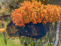 Aerial view of lake with big tree with autumn orange leaves, Switzerland.