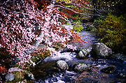 Upland mountain stream and trees with autumn colours, Mont Lozere, Cevennes national park, France