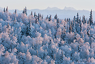 Frost covered trees in the foreground with Mess Mountain and Mount Deborah and The Dorsal Fin in the distance.