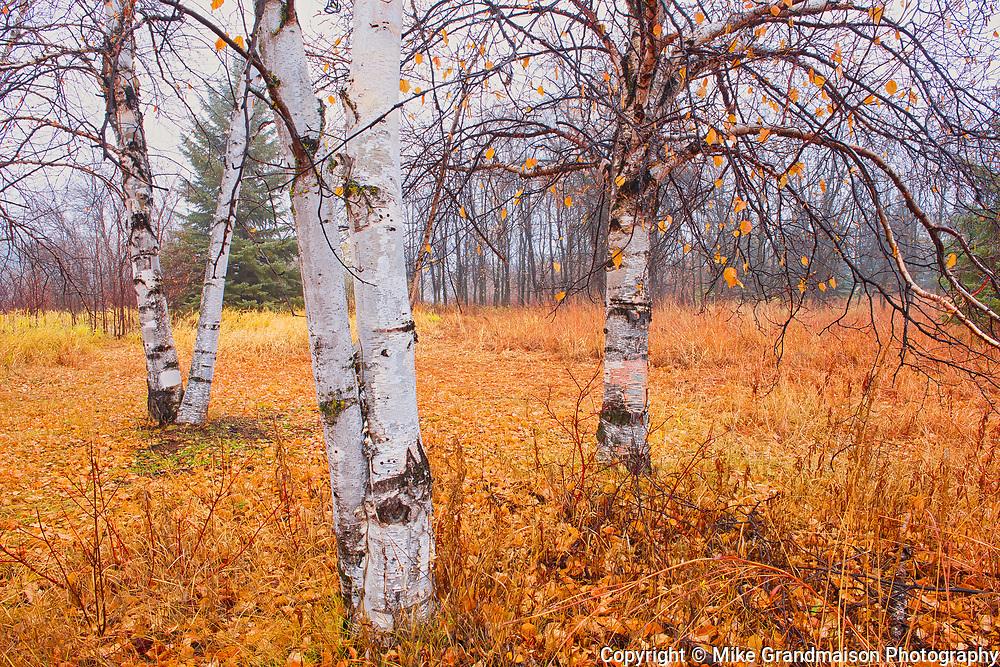 Autumn in Henteleff Park<br />Winnipeg<br />Manitoba<br />Canada