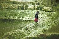 Woman in a field near Muhanga, Rwanda