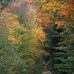 Fall in Vermont's Green Mountains.  An old logging road on the northern slopes of Rice Hill.