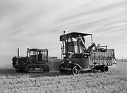 9969-4295. Unloading wheat from the hopper of the combine into the truck. July 29, 1939. working on the 1800 acre wheat fields of Glenn P. King, Moro, Oregon.