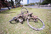 A bicycle pulled from the Ala Wai Canal is encrusted.