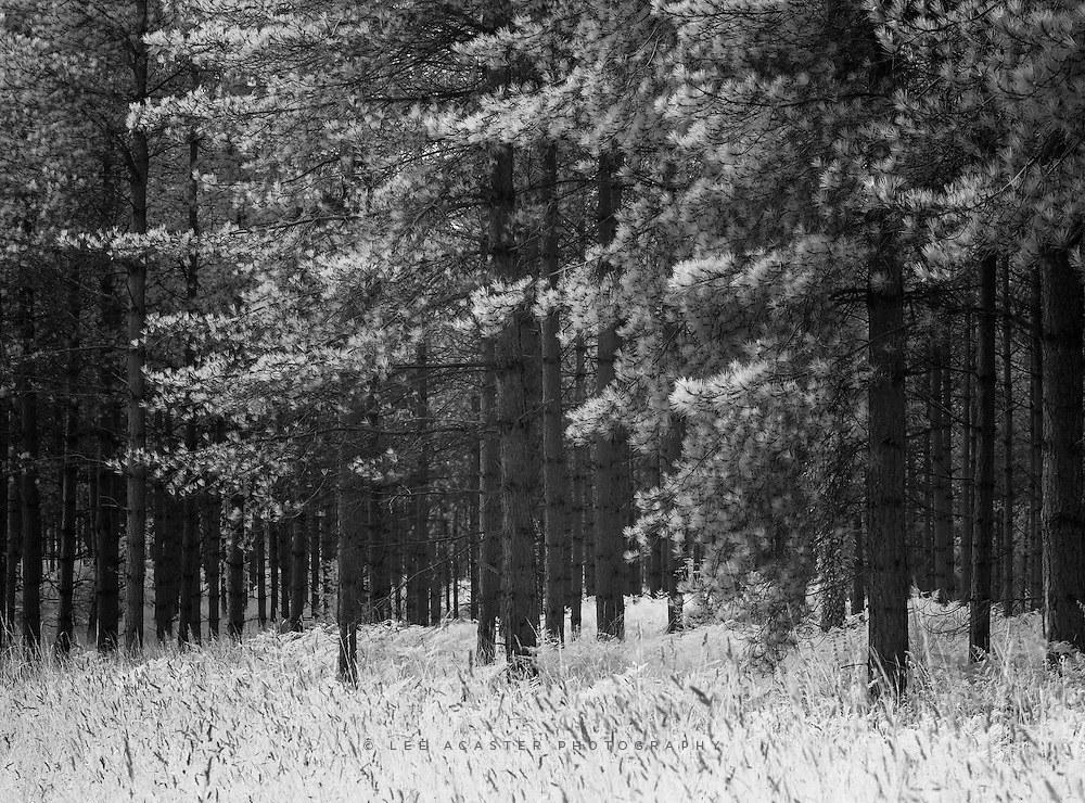 Another infrared from Thetford forest. Really love the way the firs react to IR