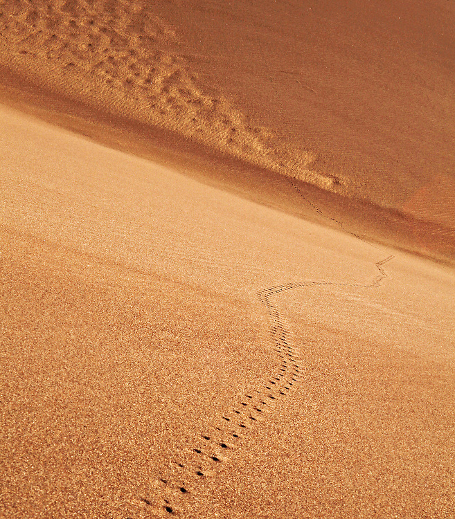 The dunes can seem barren, but upon closer inspection, the evidence of life can be found everywhere.