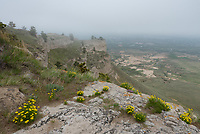 After hiking the Summit Trail to the top of Scottsbluff, I came across these wildflowers growing on the edge of a cliff.