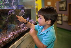 United States, Washington, Bellevue, boy (age 4) watching turtles at KidsQuest Children's Museum.  MR, PR