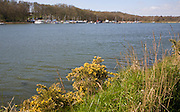Boats at moorings in Martlesham Creek, River Deben, Woodbridge, Suffolk, England