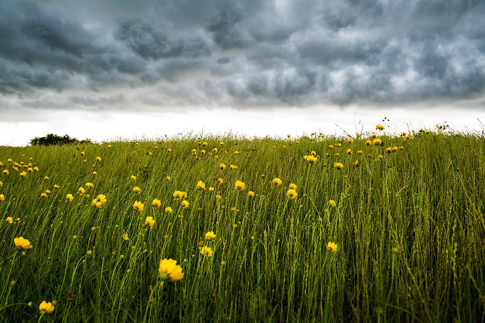 Storm and wildflowers off I-10, Katy, Texas. Double spread 2019 Wildflowers of Texas Special Edition, Texas Highways Magazine.