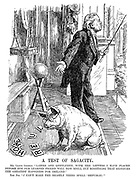 """A Test of Sagacity. Mr Lloyd George. """"Ladies and gentlemen, with the letters I have placed before him our learned friend will now spell out something that signifies the greatest happiness for Ireland."""" The pig. """"I can't make the beastly thing spell 'Republic.'"""""""