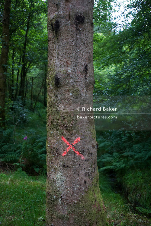Red painted cross on trunk of tree in Inchree, Scotland.