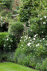 Border with high trellis boundary covered with climbers. Rosa 'Iceberg' in the foreground