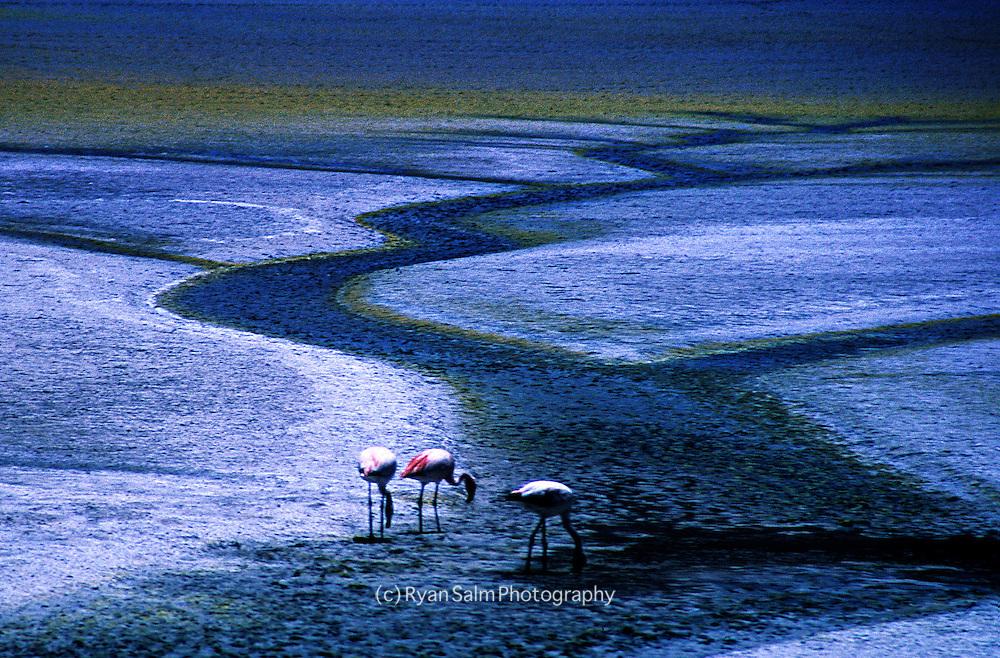 Flamingos <br /> Salar de Uyuni, Bolivia