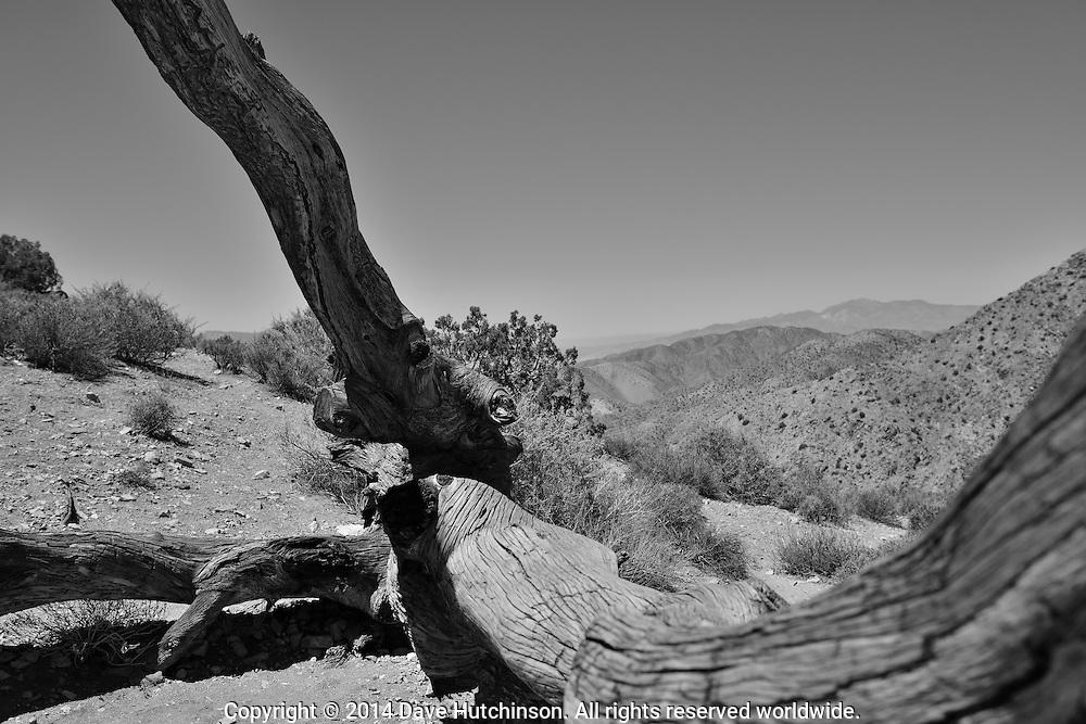 Joshua Tree National Park scene near Keys View, Joshua Tree, San Bernadino County, California, United States.