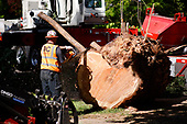 Tree removal in Lake Oswego 2021