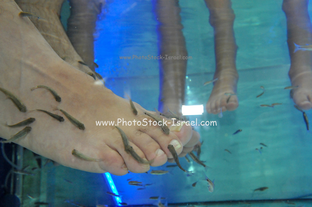 Fish Pedicure. Fish SPA therapy treatment in Eilat, Israel