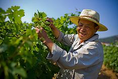 China Winery