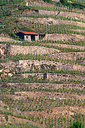 vineyard hut hermitage rhone france