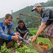 From left, Everett, Thomas Tolliver and John wash off freshly picked turnips inside the Fresh Start Garden in Logan, W.V., on Wednesday, June 05, 2019. The farming program offers those in recovery a fresh start. Participants, many of whom come from the Day Report Center, can be there voluntarily or use the program to fill ordered community service hours. The one thing they have in common is their struggle with addiction to opioids.