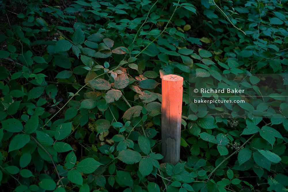 Spray-painted stake marks a walking path in the Enzwald forest near village of Kälbermühle in Germany's Black Forest