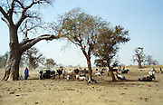 Local people tend cattle in the Sahara Desert in Upper Volta, now named Burkina Faso