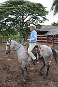 Horse and rider at a milking station on a cattle ranch outside the town of Trinidad, Cuba