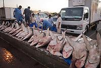 Dead sharks at Dubai fish market. Dubai, one of the seven emirates and the most populous of the United Arab Emirates sits on the southern coast of the Persian gulf. //<br /> <br /> Des requins-marteau en vente libre au marché aux poissons de Dubai.