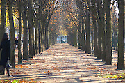 Along the Les Champs Elysees street park, tree lined allee, single woman in autumn Paris, France.
