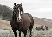 MEET HANDSOME! HURBIT MEANS HANDSOME WITHIN THE AMERICAN INDIAN ALGONQUIN TRIBE.  THIS STALLION IS SO EXQUISITE THAT HE APPEARS IN MY FIRST SERIES AND THIS UNA SERIES A TOTAL OF 3 TIMES.  HE APPEARS AS 'HANDSOME' IN MY FIRST SERIES AND THEN AGAIN IN THIS SERIES TITLED 'ANNAWAN' - CHIEF. NEED I SAY MORE!