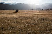Late afternoon sun falls on a meadow in Rocky Mountain National Park