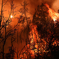 The forest is engulfed in flame in Bonny Doon on August 20.