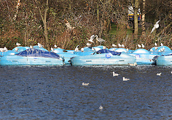© Licensed to London News Pictures. 23/12/2015. London, UK. Birds rest on unused rowing boats in the Serpentine in  Hyde Park. Photo credit: Peter Macdiarmid/LNP