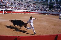 France, Provence, Bouche du Rhone, Ste. Maries de la Mer, Course Camarguaise. // France, Provence, Bouche du Rhone department, ciy of Saintes Maries de la Mer. Bull race.