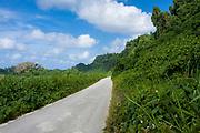 endless road to nowhere through lush green vegetation