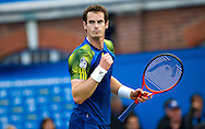 Britain's Andy Murray reacts after winning the semifinal match against Jo-Wilfried Tsonga of France, for the Aegon Championships at the Queen's Club in London, Britain, 15 June 2013. EPA/BOGDAN MARAN