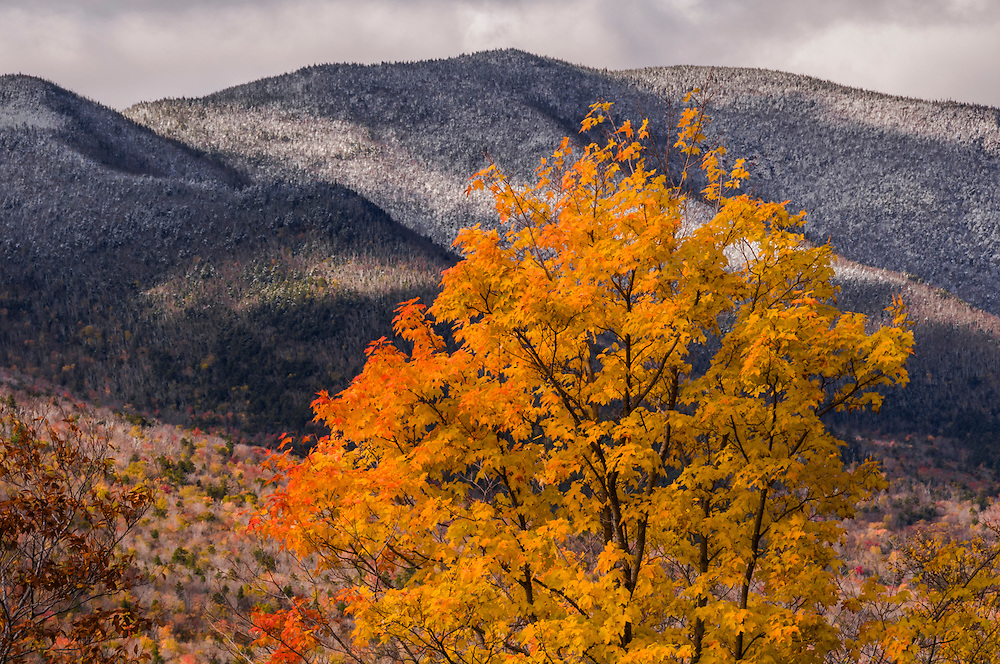 Scar Ridge dusted with snow, bright yellows of fall foliage in foreground, White Mountain National Forest, Lincoln, NH