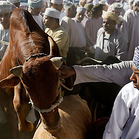 Nizwa, Sultanate of Oman - 28 November 2008.Animal market in Nizwa city..Photo: EZEQUIEL SCAGNETTI.