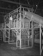 5590Part of the stationary hop picker at the E. Clemens Horst hop ranch near Independence, Oregon. September 1, 1942.