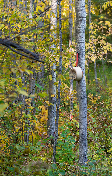 An old and rusted pot with a red handle hangs from a nail on a tree in the forests of rural Manitoba, Canada