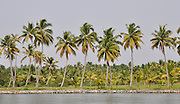 India, Kerala backwaters, Landscape