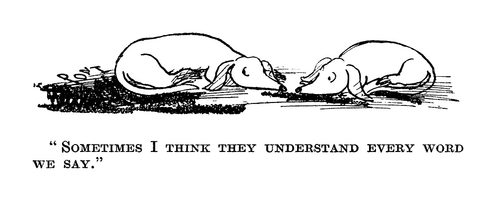 """""""Sometimes I think they understand every word we say."""""""