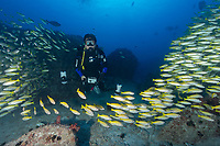 Max Bello with School of Fish in Seychelles