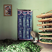 Silkworms feeding in bamboo baskets and mulberry leaves drying on the floor in an interior of a home in Chi Dong, silkworm rearing village, Hanoi, Vietnam. With Vietnam's growing population making less land available for farmers to work, families unable to sustain themselves are turning to the creation of various products in rural areas.  These 'craft' villages specialise in a single product or activity, anything from palm leaf hats to incense sticks, or from noodle making to snake-catching. Some of these 'craft' villages date back hundreds of years, whilst others are a more recent response to enable rural farmers to earn much needed extra income.