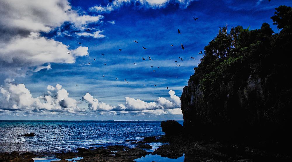 Colony of Bats In Flight Along Fiji Coast